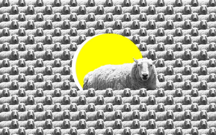 sheep outside-01